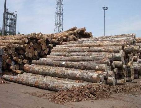 亚洲最大木结构屋面即将完工