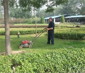 中国联通山西省分公司第二枢钮楼绿化修剪