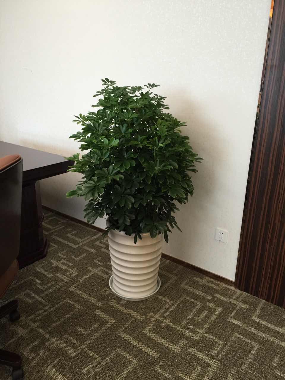 一花一世界,一桌一绿植,桌面绿植大推荐!