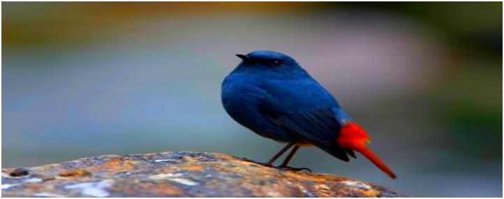 不丹7日观鸟之旅