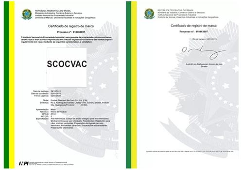正典球苗英文商标在巴西成功注册