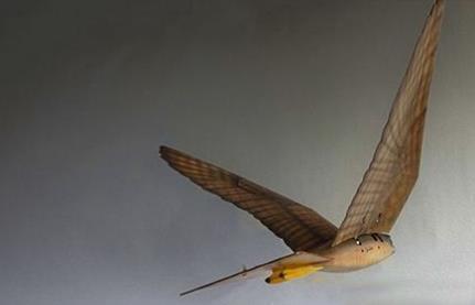 """荷兰男子用3D打印机仿真机器鸟,机器猛鸟翱翔空中""""以假乱真"""""""