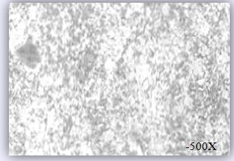 雷竞技烯改性雷竞技官网DOTA2,LOL,CSGO最佳电竞赛事竞猜银浆