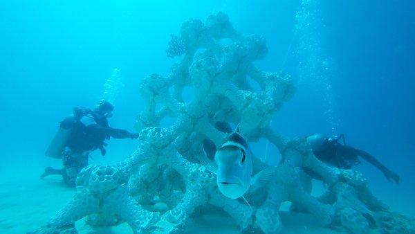 马尔代夫迎来世界最大3D打印珊瑚礁
