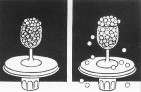 探究种子吸水