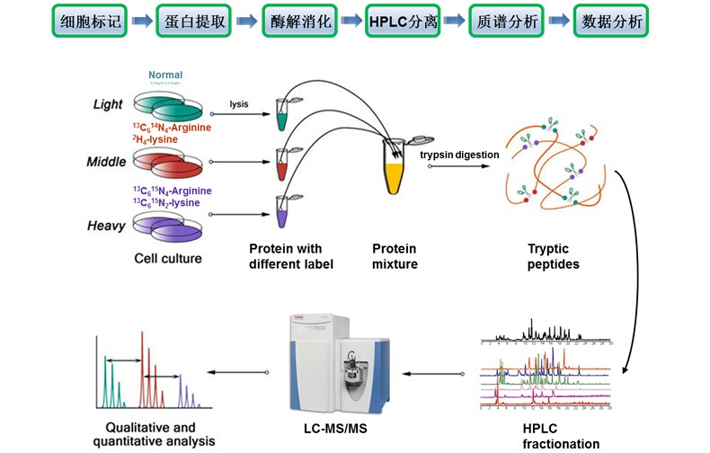 SILAC定量蛋白质组学分析