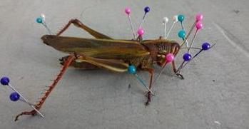 自制昆虫标本