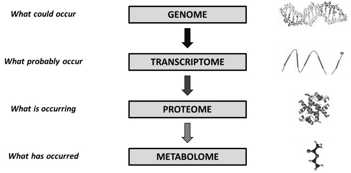 膽汁酸全譜分析