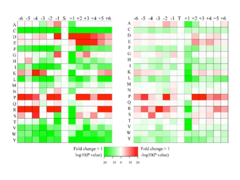 蛋白功能描述基因本论分析
