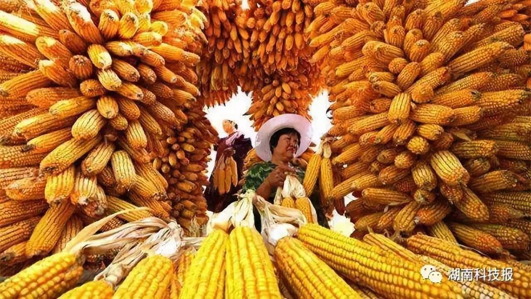 秋分时节话农事 传统民俗庆丰收 --兰州乐虎国际娱乐app举办首届农民丰收节