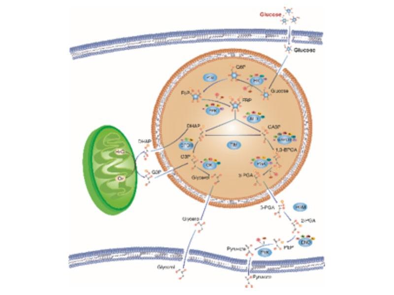 KEGG代謝通路分析