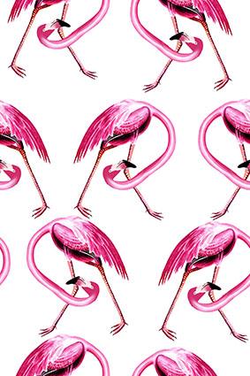 粉红火烈鸟群鸟巢