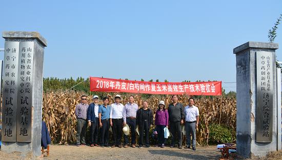 2018年丹皮/白芍间作玉米高效生产技术 验收会在济宁举行