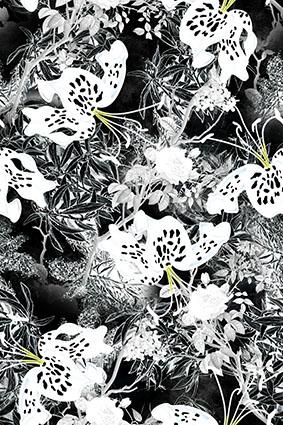 艺术黑白滤镜花卉