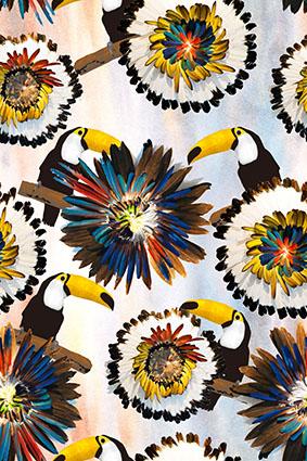 大嘴鸟炫彩创意羽毛花