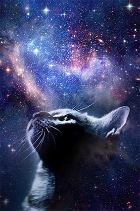 猫头炫彩幻想星空
