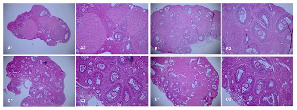 间充质干细胞抗衰效果如何?看看这些研究成果就知道了!