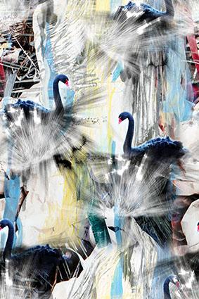 伞形线抽象黑色白鹅