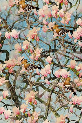 缭乱树枝盛开粉色花卉