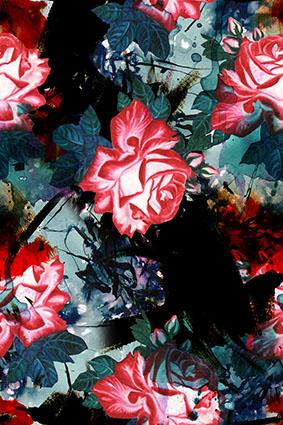 黑底植物大红花繁花