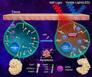 必威官网登录纳米材料助力纳米光遗传技术微创治疗肿瘤