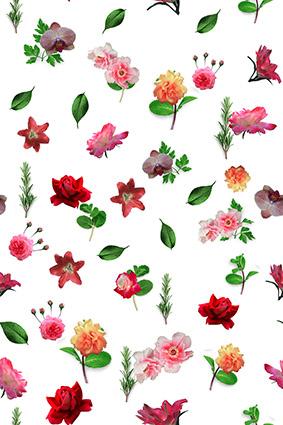 元素原创植物花卉