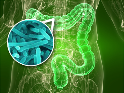 宏蛋白组揭秘健康人群肠道微生物的潜在及活跃功能