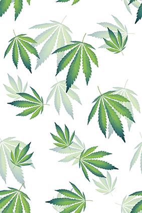 尖角绿叶植物树叶
