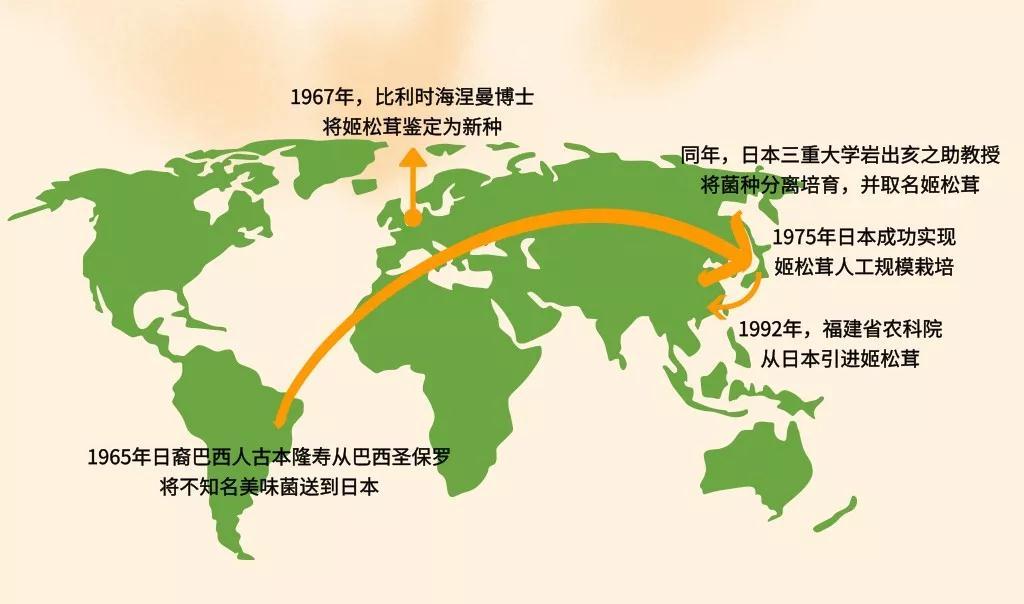 姬松茸丨低調的營養實力派