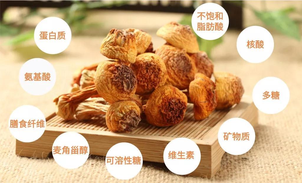 姬松茸丨低调的营养实力派