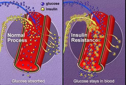 科研新发现 | 灰树花活性多糖F2具有降血糖作用