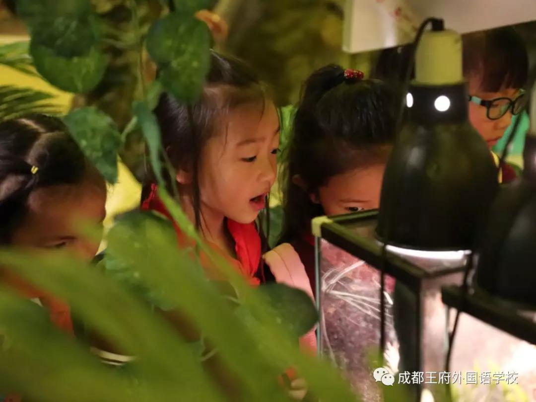 探究生命奥秘,描绘童年色彩——记成都王府2019秋季研学(一)
