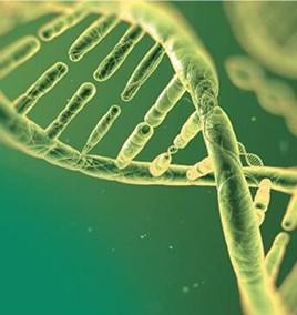 表观遗传学抗体系列