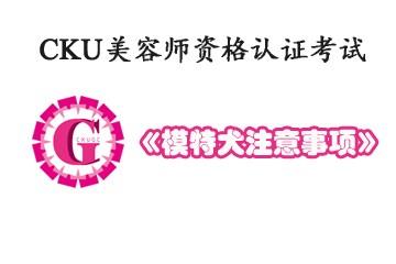 《CKU美容师资格认证考试》-模特犬注意事项
