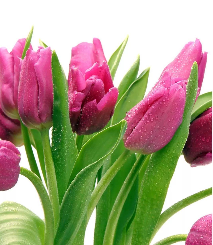 选一束鲜花,留一室馨香。