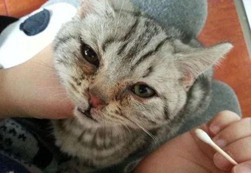 爱干净的小猫咪,为什么脸上会挂着脏脏的泪痕呢?