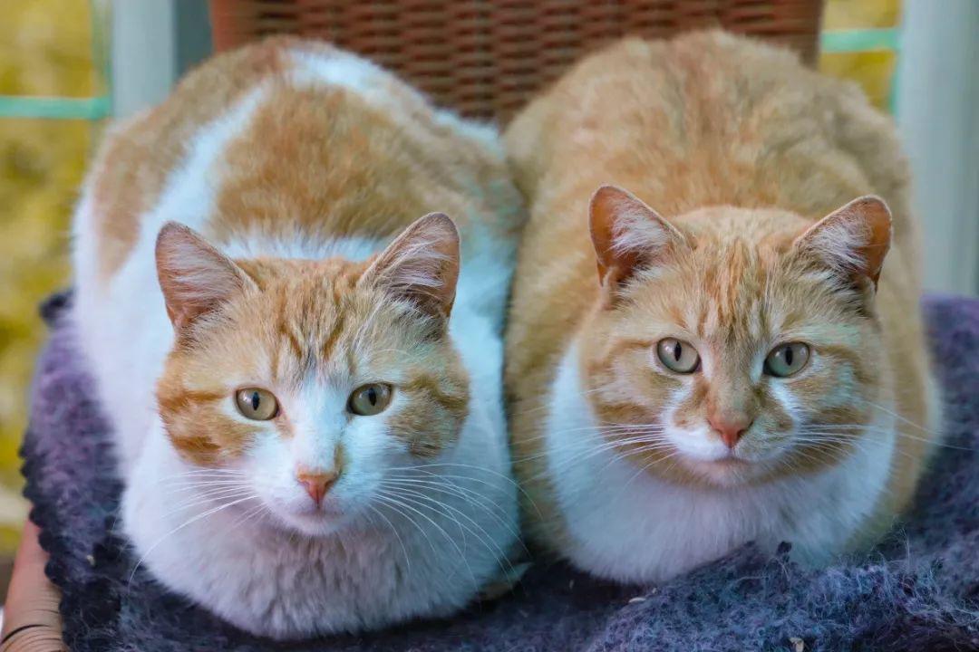 接第二只猫回家前,你必须做好这些准备工作。