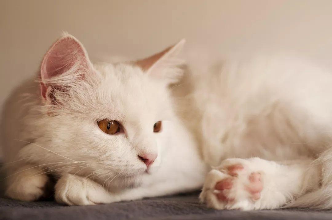 这才是抱起一只猫的正确姿势。