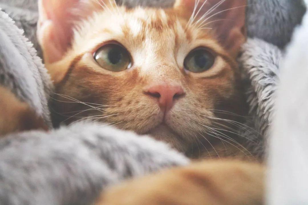 猫咪绝育后,铲屎官必须要重视的注意事项!