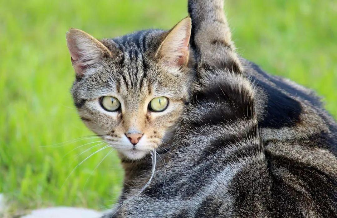 小猫咪软便了怎么办?看完这个就不会手忙脚乱了。