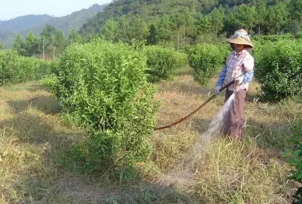 節省勞力!滴灌施肥技術全解(收藏版)
