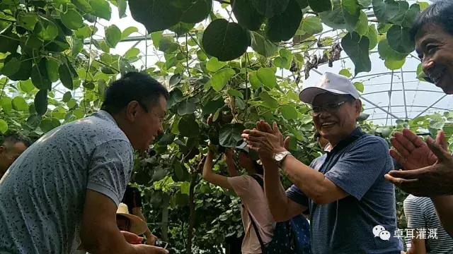 我省猕猴桃产业蓄势待发——首届湖北省猕猴桃技术培训会圆满落幕(图)