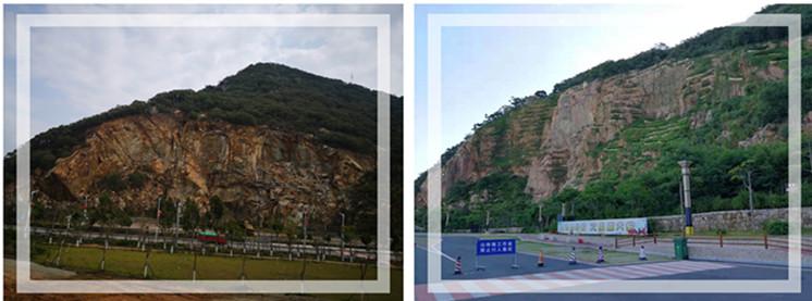 广东省造林和生态修复现场会考察我司南澳山体生态修复点