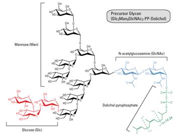 定量N糖基化蛋白质组分析