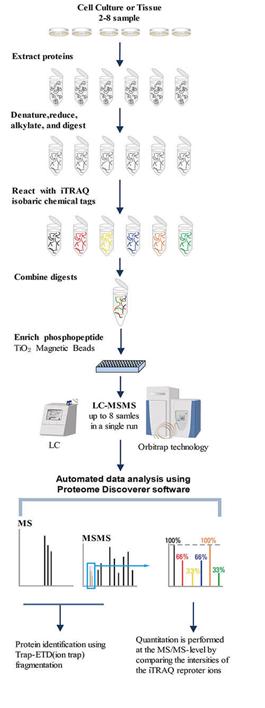 定量磷酸化蛋白质组分析