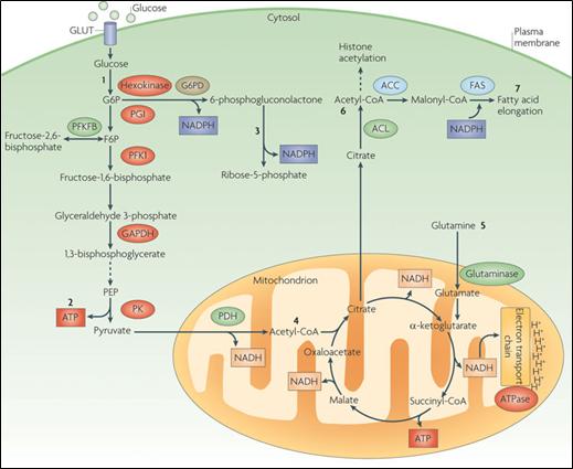 靶向代谢组学