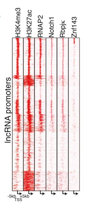 LncRNA测序服务