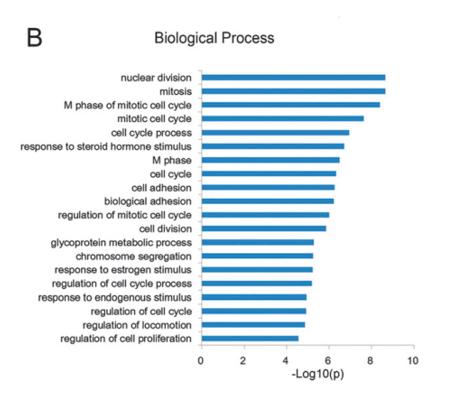mRNA测序服务