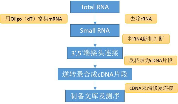 SmallRNA测序服务
