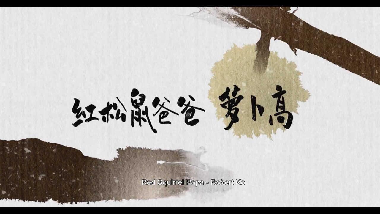 flash动画制作 中国水墨动画归来《 红松鼠米高》2020年上映!